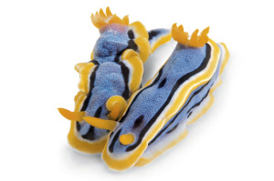 5-blue-yellow-714